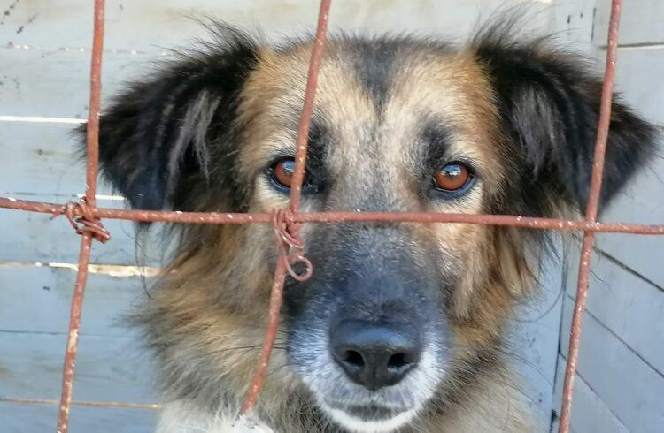 полигон новороссийск бездомные животные собаки