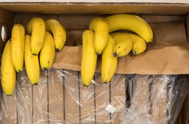 бананы новороссийск таможня