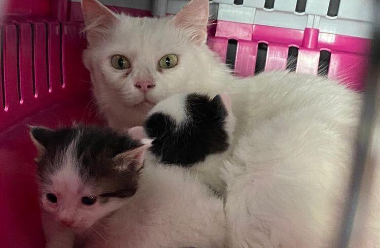 кошка кошечка котята пионерская роща новороссийск